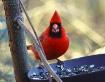 What? A birds got...