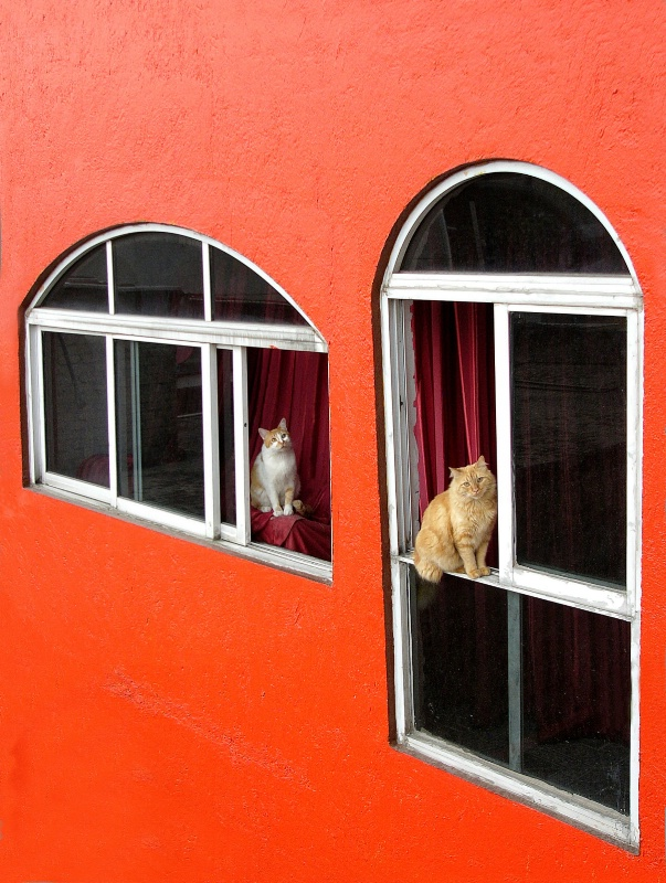Orange wall with cats
