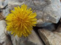 The prettiest flowers bloom in the rocks