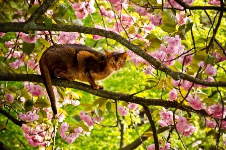 ~ ~ 桜の猫 ~ ~