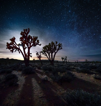Moonset Over Joshua Trees