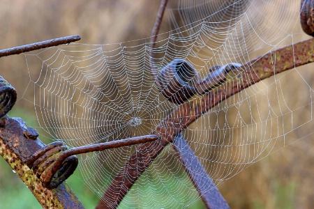 Web on a Rake
