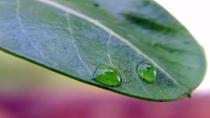 Twin-Droplets