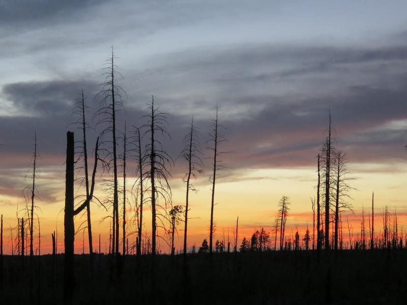 Desert Sunset - ID: 15131585 © Nancy Auestad