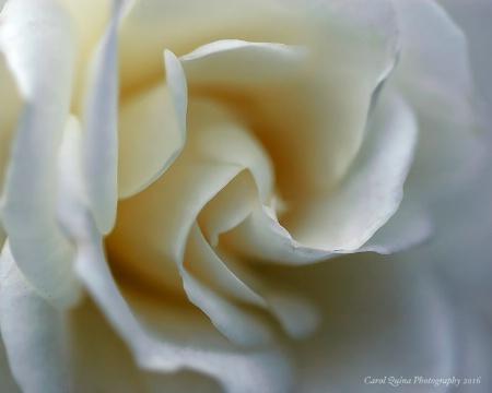 ~White~