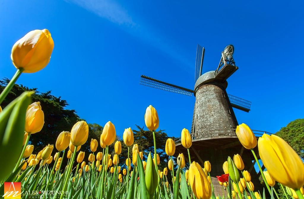Spring Dutch Garden