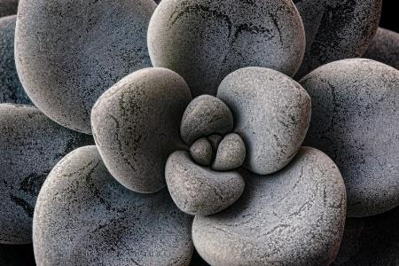 Stonecrop III