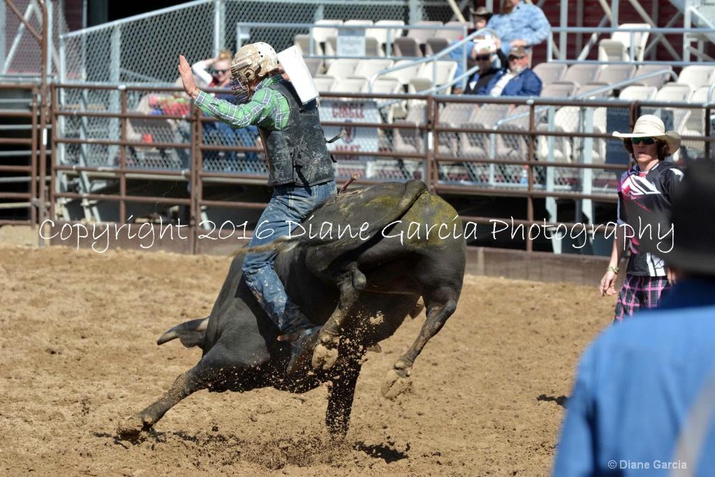 UHS Rodeo SF16 Bulls 1.JPG - ID: 15142830 © Diane Garcia