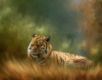 Photography Contest - May 2016: Sleeping Tiger