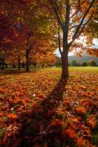 An Autumn Carpet