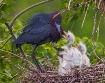 Little Blue Nest ...