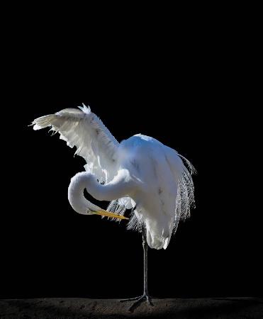 (Egret) Balancing Act
