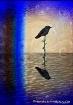 Hummingbird Refle...