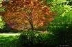 Gibbs Gardens, Ba...