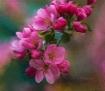 Shady Tree Blooms
