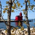 © Denise Woldring PhotoID# 15153411: Big Red Ligthouse #3