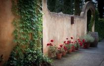 Geraniums at the Wall