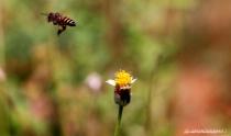 Honey Bug.!