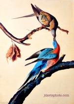mahjbirds w logo