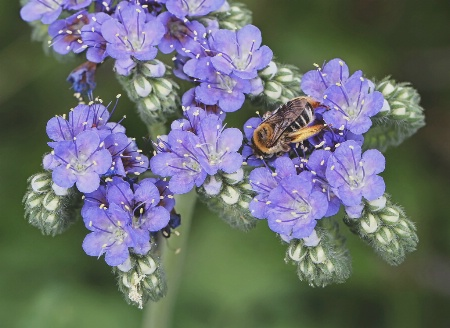 Bumblebee Blues