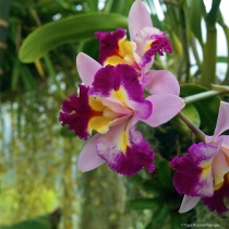 Beautifil Orchid