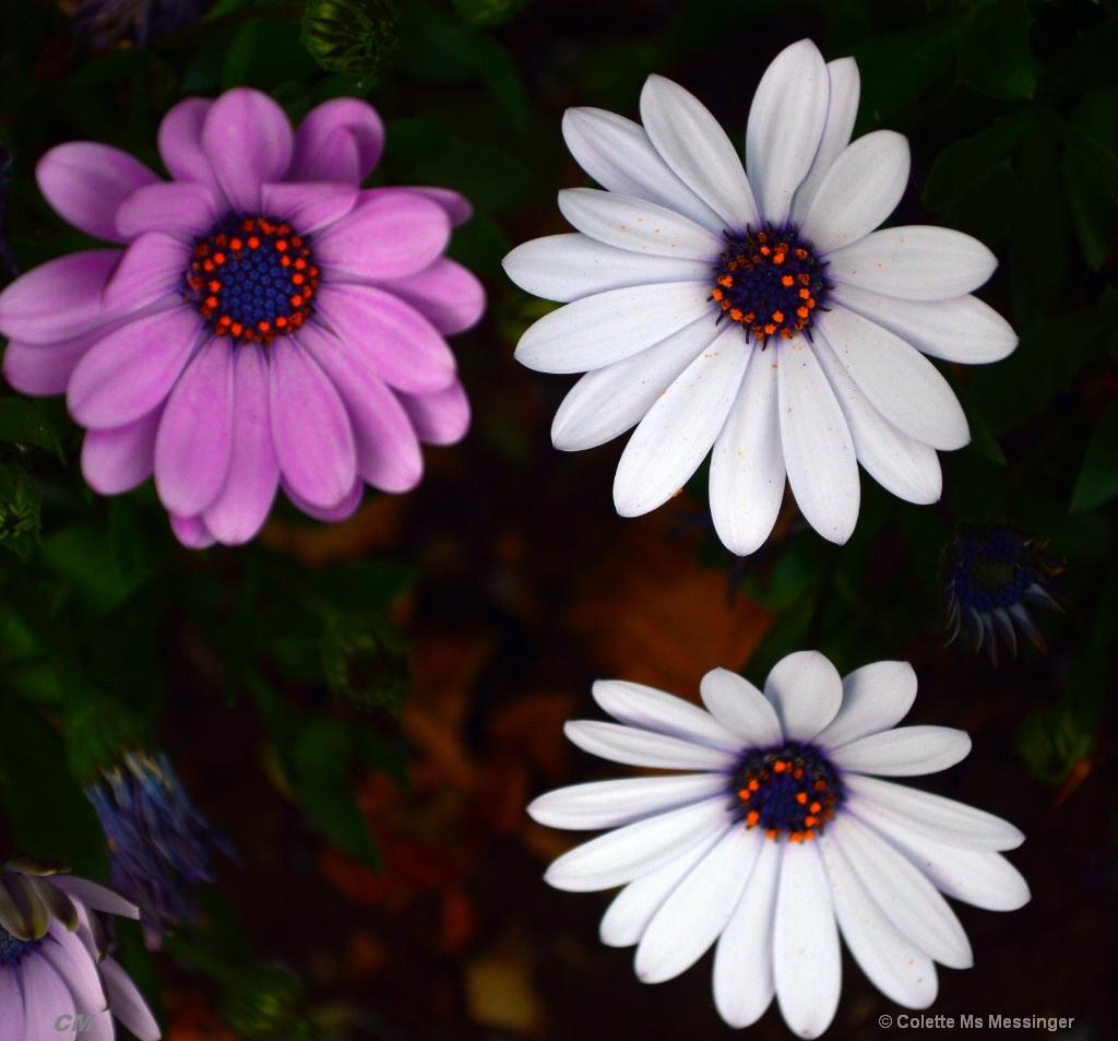 FLOWERS X 3 16.JPG