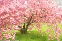 One Single Tree