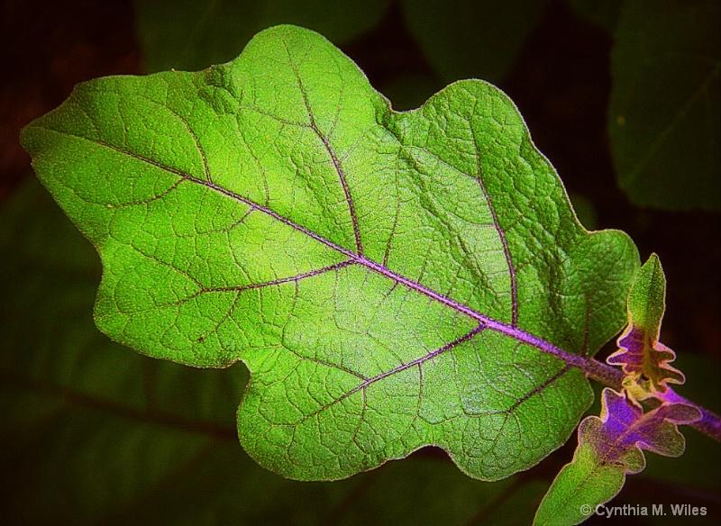 A Leaf in my Garden