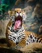 The Big Yawn-Jacq...