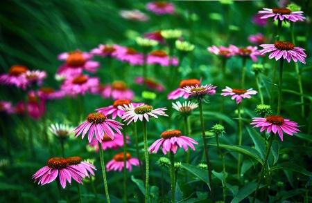 a peek into my garden