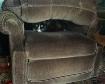 Cushioned Cat