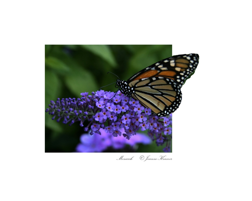 Monarch.......Out of frame