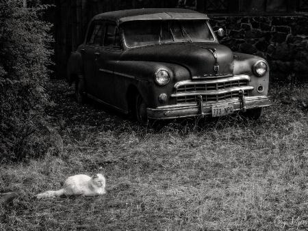 Cat, Dodge-B&W