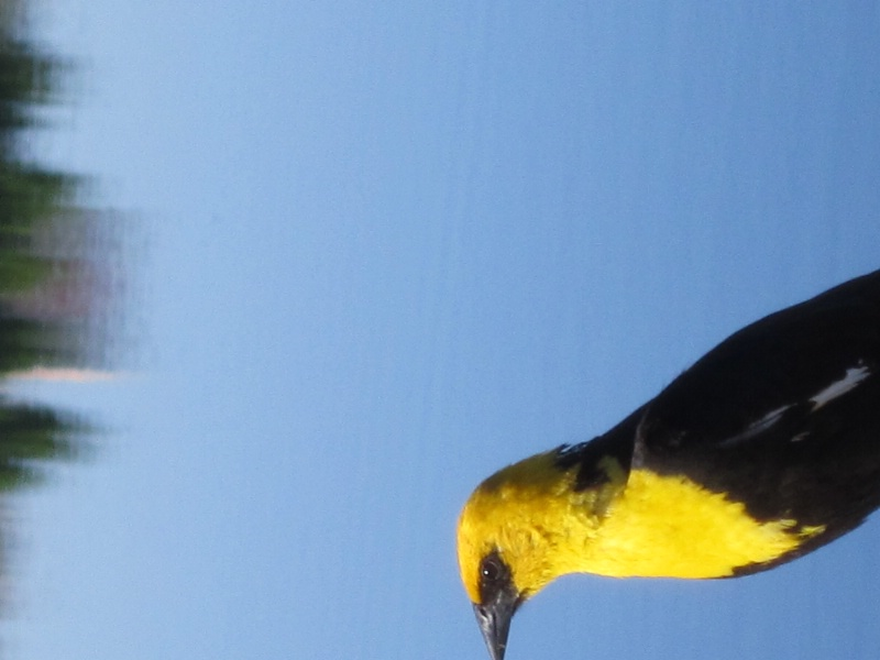 same bird poising