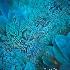 2Blue Macaw - ID: 15174361 © Carol Eade