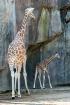 Tall & Short - Mo...