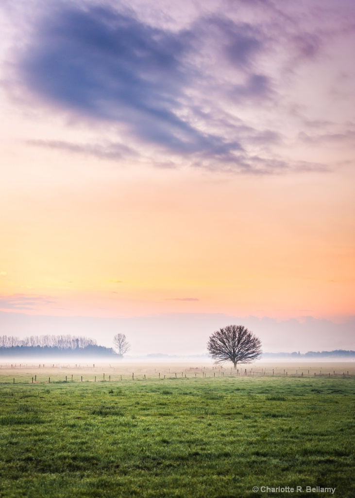 Lone tree at the sun rise