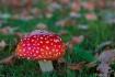 Funky-Fungi