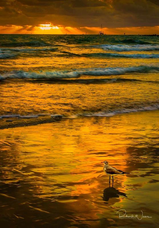 Enjoying the Sunrise - ID: 15176671 © Richard M. Waas
