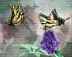 Two Butterflies A...