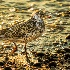 2Sunset bird - ID: 15177454 © Teresa Letkiewicz