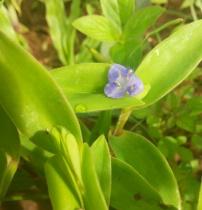 cute tiny flower