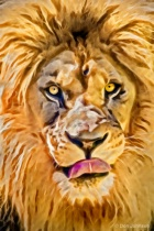 Artistic Lion with Tongue 5-22-16 478