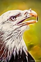Artistic Akron Eagle 5-22-16 438