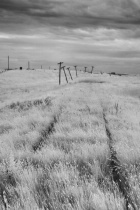 abandoned tracks and telephone poles