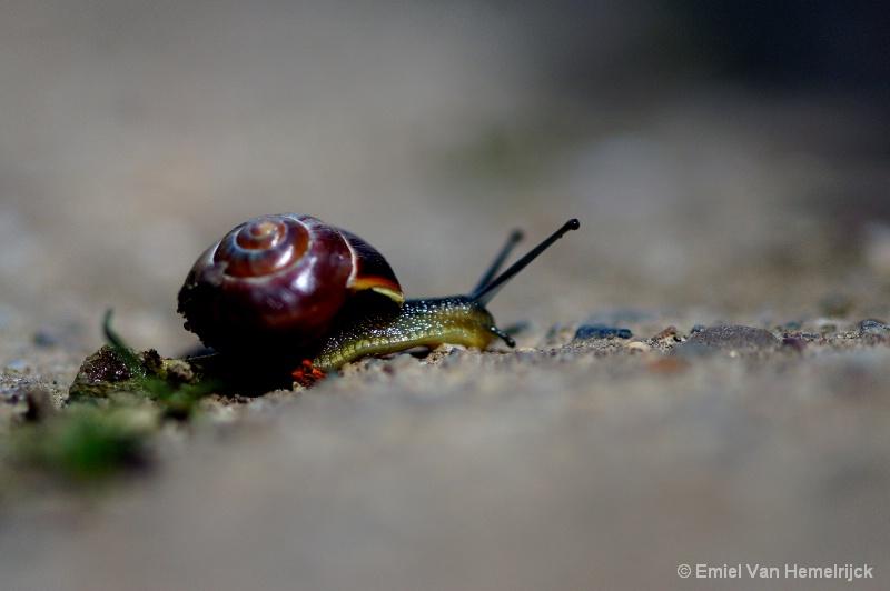 snail-shell