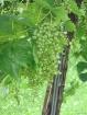 Future Wine!