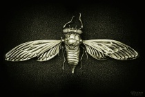 Cicada Aeternam