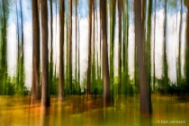 Abstract Forest 7-14-16 078