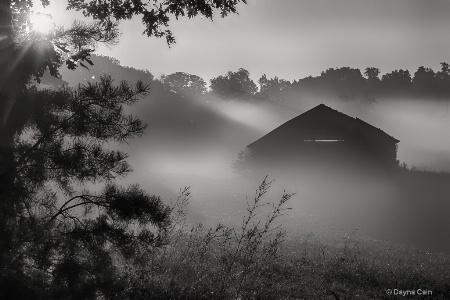 Shadows thru The Fog
